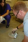 Dr. Adamski and Student Interns weigh babies before release.