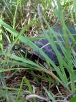 turtle release PL