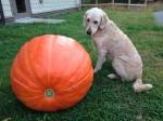 waffle pumpkin