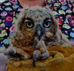 Owl Update PL